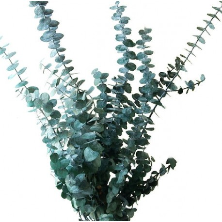 Preserved Baby Blue Foliage