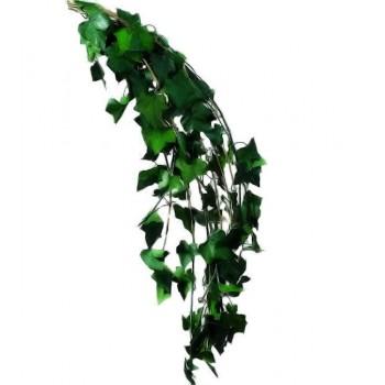 Preserved Trailing Mini Hedera Helix Ivy