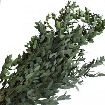 Preserved Parvafolia Foliage