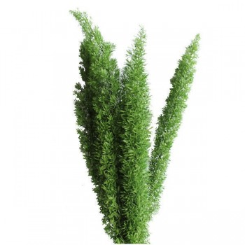 Preserved Foxtail Fern