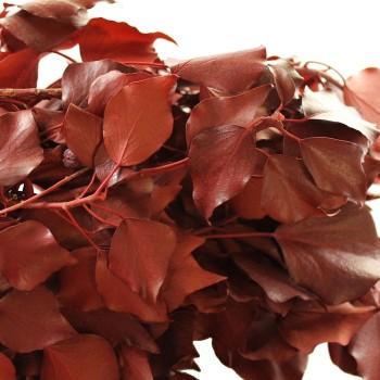 Preserved Red Hedera Arborea Ivy
