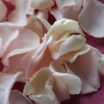 Biodegradable Pale Pink Mini Rose Petals for Throwing