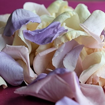 Mini Rose Petals in Pastel Pink, Ivory and Lilac Mix - Pastel Shades