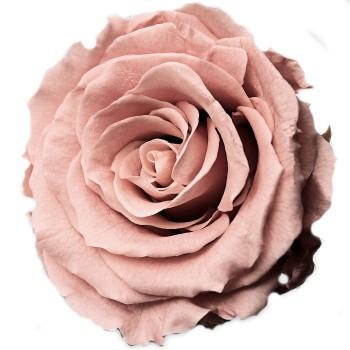 Preserved Vintage Pink Preserved Queen Rose Head