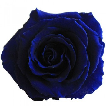 Preserved Rose in Electric Blue, Queen Size