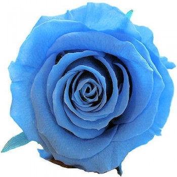 Preserved Rose is Azure Blue, Queen Size