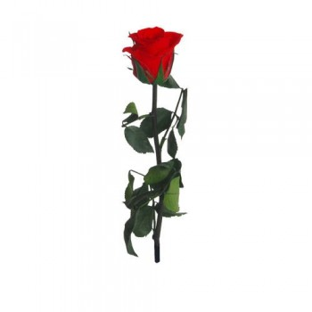 Preserved Rose in Red, The Mini Amorosa Rose (Tube) 25