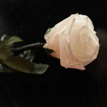 Preserved Roses with Long Stem and White Heads, case of 30 stems