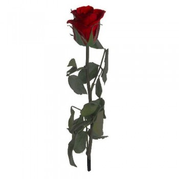 Preserved Roses with Short Stems and Burgundy Heads, case of 25
