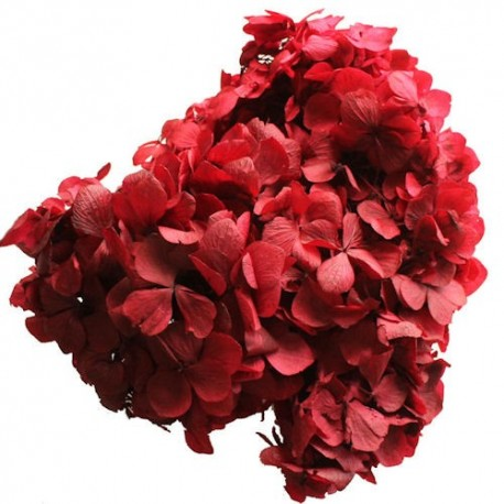 Preserved Flower Head - Red Hydrangea Head