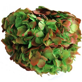 Preserved Flowers - Bi Coloured Green Red Preserved Hydrangea Head
