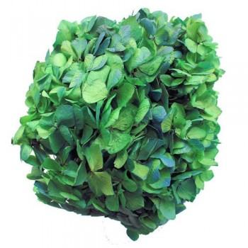Preserved Flowers - Green Blue Bi Coloured Hydrangea Head