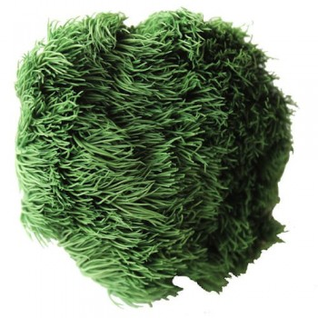Preserved Flowers - Vert Green Ball head, set of 4