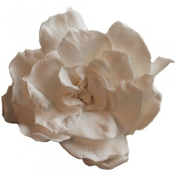 Preserved Flower Heads - White Gardenia Heads, box of 4