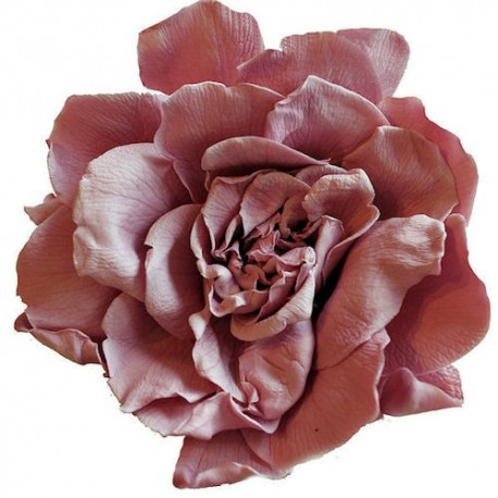 pink flower heads, Beautiful flower