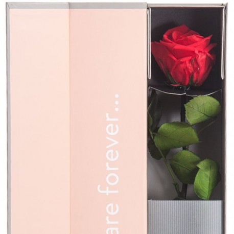 Preserved Rose Gift close up - Red Amorosa V-Rose