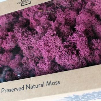 Reindeer Moss in Magenta, 500gr box