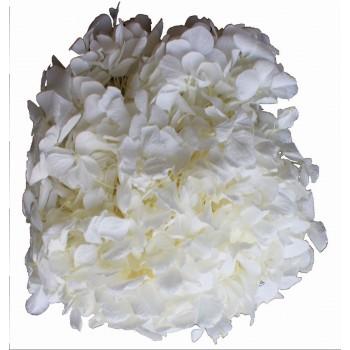 Preserved Flower Head - White Premium Hydrangea Heads