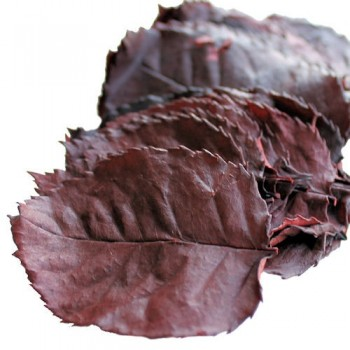 Preserved Rose Leaves (Burgundy)