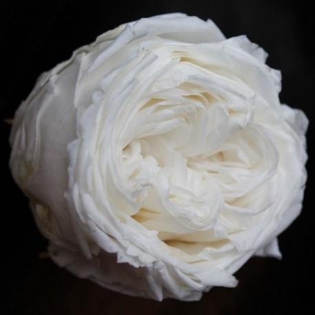 White Garden Rose Head   Set Of 6 Heads