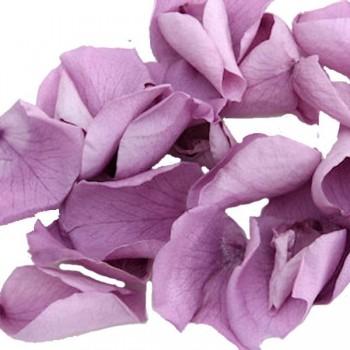 Lilac Rose Petals - 1 Litre