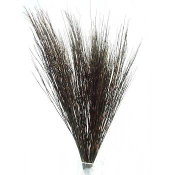 Bell Grass Male