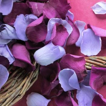 Mini Shades of Purple Rose Petals - 1 Litre