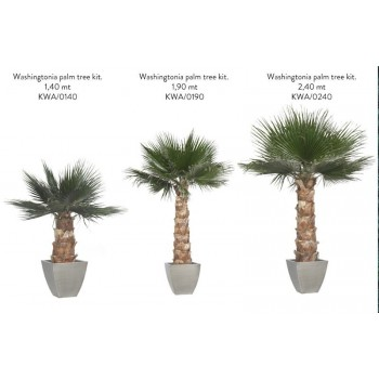 Washingtonia Palm Trees