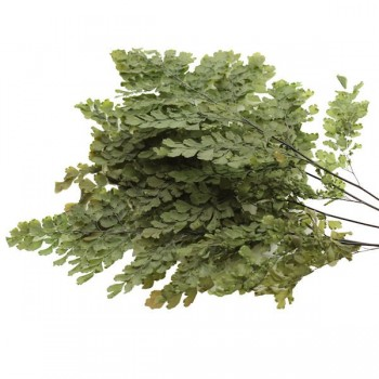 Lutti Fern Green