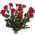 Preserved Long Stem Roses