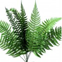 Preserved Ferns