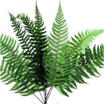 Preserved Parchemin Fern