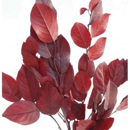 Preserved Red Salal Foliage