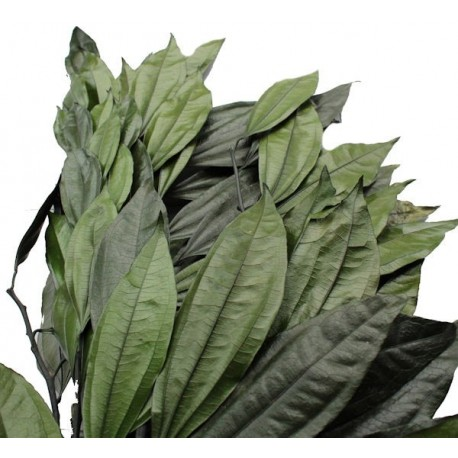 Preserved Cocolus Foliage, ideal for Artificial Trees and Green Walls