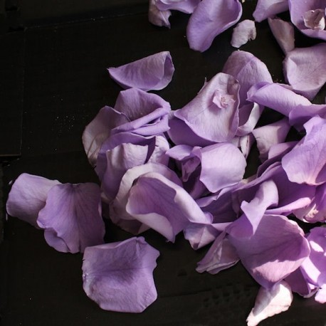 Biodegradable Preserved Lilac Mini Rose Petal Confetti