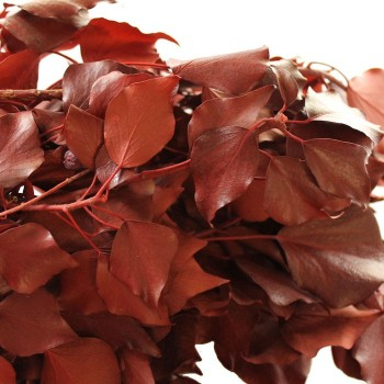 Preserved Red Hedera Arborea Ivy
