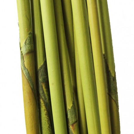 Elephant Light Green Reed