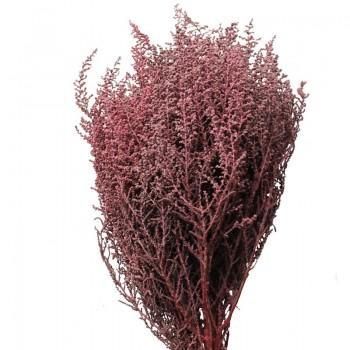 Stoebe Pink (1 Bunch)