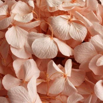 Preserved Flowers - Pastel Pink Hydrangea Heads