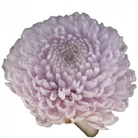 Preserved Flowers - Soft Lilac Pom Poms