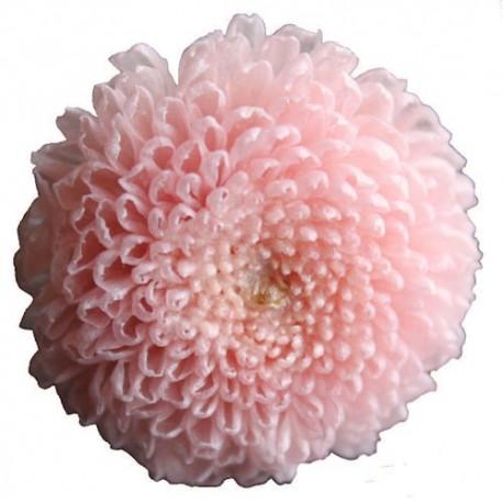 Preserved Flowers - Pink Pom Pom Head