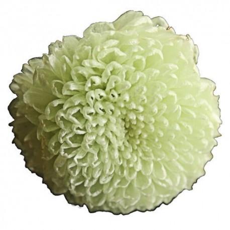 Preserved Flowers - Mint Pom Pom