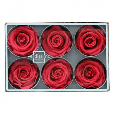 Preserved Rose Head - Hot Pink, Standard Size, Set of 6