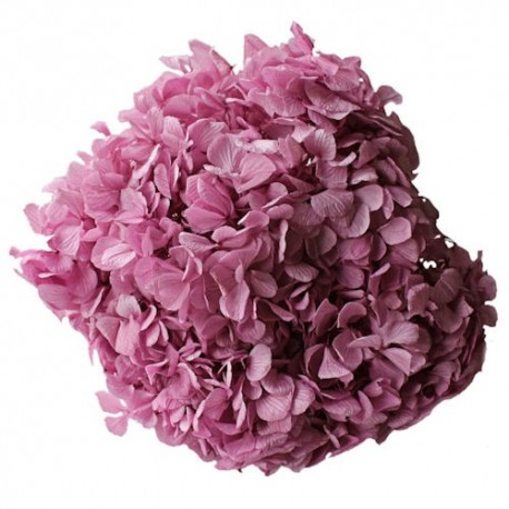 Preserved Flowers - Lilac Hydrangea Head
