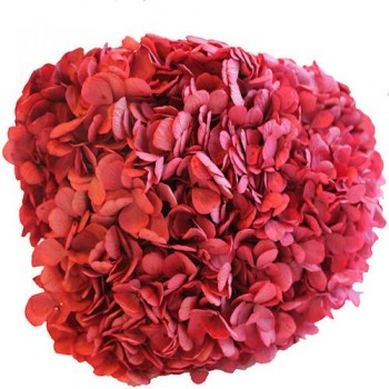 Preserved Flowers - Rose Hydrangea Head