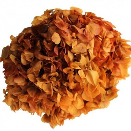 Preserved Flowers - Rust Hydrangea Head