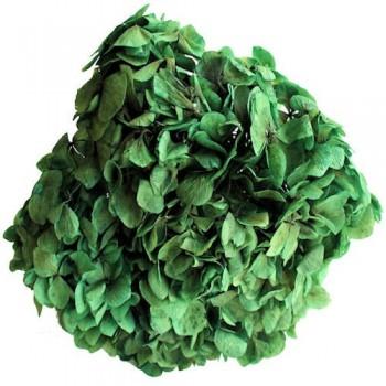Preserved Flowers - Green Hydrangea Head