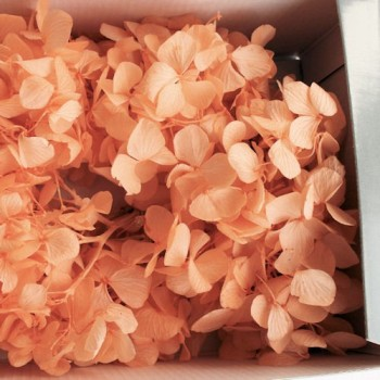 Preserved Flowers - Peach hydrangea head in a box