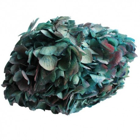 Preserved Flowers - Blue burgundy Bi Coloured Hydrangea Head