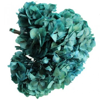 Preserved Flowers - Blue Hydrangea Head